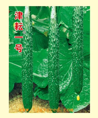 【天津耕耘】津耘一号/10克  黄瓜种子